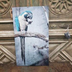 wanddecoratie papegaai - pilota stoer wonen